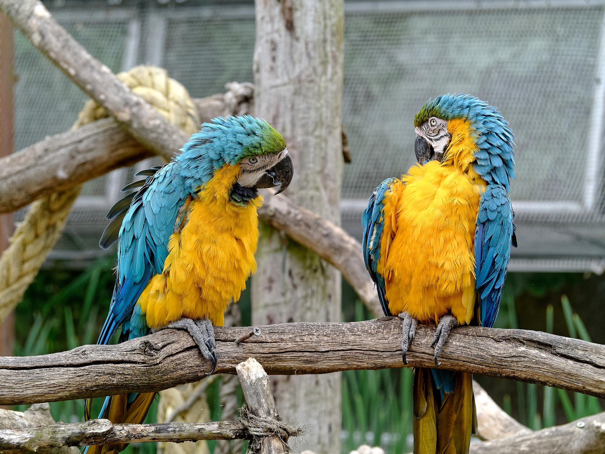 parrots having conversations that help a lead nurturing campaign